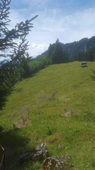 18.07.2017 im Einsatz auf der Alp (1)